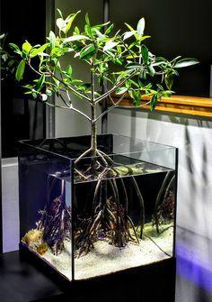 45 Stunning Aquarium Design Ideas for Indoor Decorations - Page 16 of 45 - SooPush - aquascaping Aquarium Design, Home Aquarium, Reef Aquarium, Aquarium Fish Tank, Goldfish Aquarium, Planted Aquarium, Aquarium Terrarium, Terrarium Tank, Aquariums Super