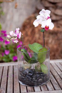 Make It: Indoor Orchid Terrarium Indoor Orchids, Orchid Plants, Indoor Plants, Orchids Garden, Orchid Terrarium, Succulent Terrarium, Terrarium Ideas, Vanda Orchids, Inside Plants