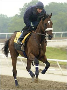 Barbaro. No matter how many great horses come & go, this one owns my heart forever.