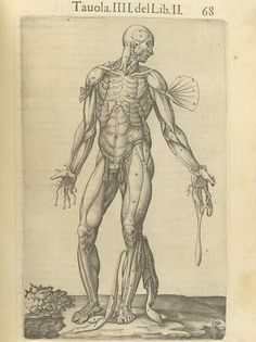 Page 68 of Juan Valverde de Amusco's Anatomia del corpo humano, 1560 featuring a flayed cadaver with flaps of muscle in the arms, hands and legs fanned away to reveal muscles underneath them. From the collection of the National Library of Medicine. Visit: http://www.nlm.nih.gov/exhibition/historicalanatomies/valverde_home.html