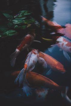 teapalm:  (Tasha Marie) | Koiinstagram | society6