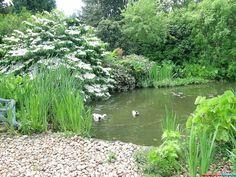 Английский сад Denmans Lane Gardens
