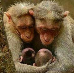 Bildergebnis für cute monkey family