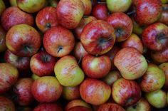 Apple Farm | Greensboro, NC Travel & Tourism - Greensboro, NC Accommodations, Restaurants, Events & Attractions