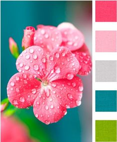 Spring or Summer color palette Color Palette - Paint Inspiration- Paint Colors- Paint Palette- Color- Design Inspiration