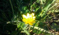 Un #piccolo #sole :) #instanatura #instaflower