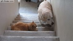 Don't disturb the cat, don't disturb the cat… OH GOD | Gif Finder – Find and Share funny animated gifs