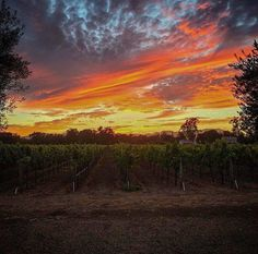 Winemaking with a view 📸 Napa Vineyards, Beautiful Pictures, Celestial, Sunset, Painting, Outdoor, Instagram, Outdoors, Pretty Pictures