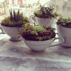 Tea cup succulents via janell_pdx on instagram