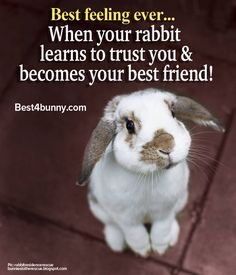 Best feeling ever... When your rabbit learns to trust you & becomes your best friend! www.best4bunny.com