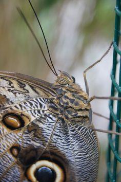 close up vlinder