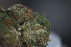 http://buyweedonline.ca/product/buy-bubble-gum-marijuana/   When grown properly, the Bubble Gum strain offers up bright neon green and orange-smattered bundles of joy. The very frosty, snowcapped nugs just absolutely glisten in the sunlight. The bud structure tends to be on the smaller side and dense, paying homage to its indica lineage. Upon cracking open the bag, I was immediately smacked in the face with the smell of my days past.