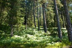ΕΘΝΙΚΟΣ ΔΡΥΜΟΣ ΠΙΝΔΟΥ - Pindos National Park