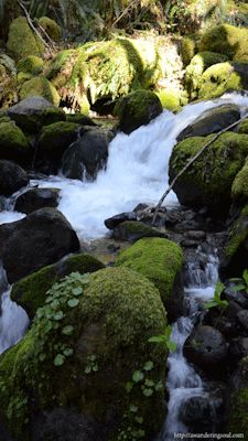 connie-awanderingsoul:  Below Dry Creek Falls in the Columbia Gorge, Oregon For more about me and my story check out http://awanderingsoul.com