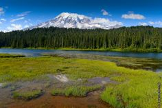 Mont Rainier (from Krupa photographies - Galeries) Mount Rainier National Park, Landscape Photography, Washington, National Parks, Around The Worlds, Mountains, Usa, Nature, Pictures
