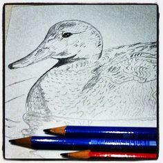 #bird #birdfreaks - @pacotorresill- #webstagram