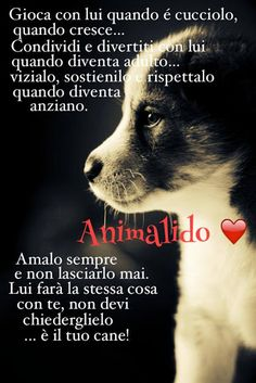 Tenerezza e Amore Love Pet, I Love Dogs, Puppy Love, Animals Of The World, Animals And Pets, Dog Friends, Best Friends, Yorky, Cute Little Puppies