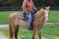 Ginger is a 10yr old 14.1 hand tall Strawberry Roan Tennessee Walking Horse Mare.  She is just as cute and sweet as a little button!  Ginger wants to be someone's little Puppy Dog, and is at your side every chance that she gets.
