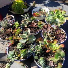 Creations & cuttings. #salvageandsucculents #succulentlife #succulover #succulentplants #succulentaddict #succulent #succulents #succulover #succulentgarden #recycled #repurposed #upcycle #upcycled #waterwisegardening #waterwise #droughttolerant #droughttolerantplants #droughttolerantgardening #artisan #crafty #diy #homedecor #homeandgarden #gardening  #mygarden by salvageandsucculents #waterwise #waterwisegardening #drought #droughttolerant