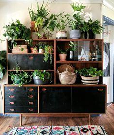URBAN JUNGLE   BOHO   INTERIOR DESIGN   INDOOR PLANTS   STYLING  #interiordesign #interiordecorating #homedecor #plants    www.cocoroseinteriors.com.au