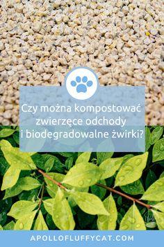 Wyrzucanie biodegradowalnych żwirków i odchodów pupila do ogródka lub kompostownia może wydawać się kuszące, ale niestety nie jest to najlepszy pomysł. Dlaczego? Po pierwsze odchody zwierząt domowych mogą być niebezpieczne dla ludzkiego zdrowia nawet, gdy są rozłożone. Po drugie biodegradowalność nie jest tym samym co kompostowalność. Dowiedz się więcej o ekologicznej utylizacji żwirków i kocich odchodów w moim artykule. Lifestyle, Blog, Blogging