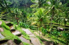 Beautiful-green-terrace-paddy-fields-on-Bali-Indonesia.jpg (1100×731)