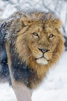 The King in the snow.
