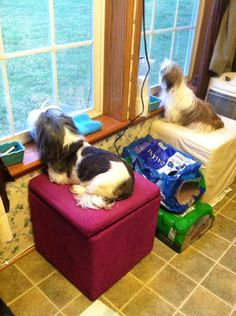 Cocoa and Sadie looking out the window - 2014 - Carrollton  Ohio