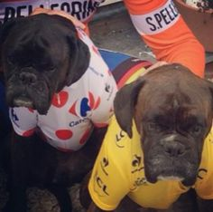 DOGS TOUR FRANCE