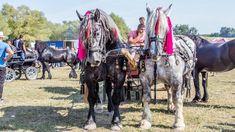 Caii lui Dl  Fănel din Dornești, Suceava Romania, Horses, Horse