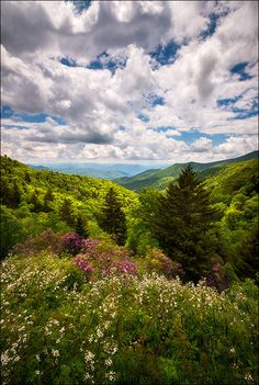 Dave Allen Photography posted a photo:  Walking on Sunshine - North Carolina Blue Ridge Parkway Scenic Landscape NC Appalachian Mountains  Late afternoon sunlight dappled in the valley along the Blue Ridge Parkway between Waynesville and Cherokee NC. Hope you enjoy the view!  Single exposure, Nikon D810 and Zeiss 15mm Milvus  © 2017 Dave Allen Photography, All Rights Reserved. This image may NOT be used for anything without my explicit permission.