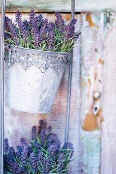 lavender in pretty containers