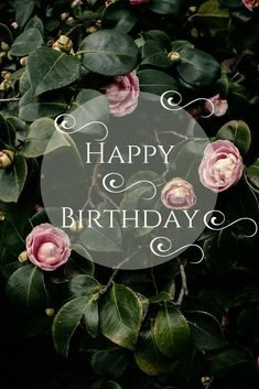 birthday images for women 52 sweet and funny Happy Birthday images for men, women, siblings, friends & family. Touching birthday images full of humor & beautiful loving wishes. Cool Happy Birthday Images, Best Birthday Wishes, Birthday Wishes Cards, Happy Birthday Messages, Happy Birthday Funny, Happy Birthday Greetings, Birthday Love, Happy Birthday For Her, Birthday Pins