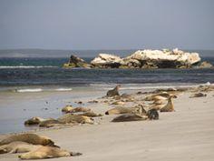 Seal Bay Conservation Park, Kangaroo Island, South Australia