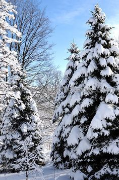 Gyönyörű havas táj