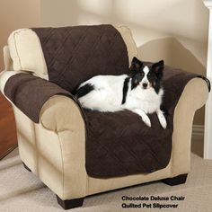 Quilted Pet Slipcovers