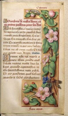 """aleyma:  """" Jean Bourdichon, """"Quince"""", from the Grandes Heures d' Anne de Bretagne, c.1503-08 (source).  """""""