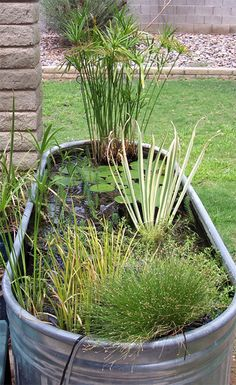 The stock tank pond - an apartment/small space friendly water feature. Easy to drain.