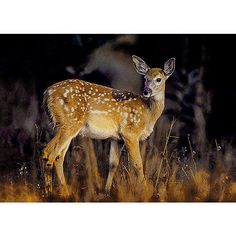 Deer photo, Fall color, faun photo, yellow brown dark blue art print,... ($30) ❤ liked on Polyvore featuring home, home decor, wall art, deer home decor, yellow home accessories, navy home decor, brown home decor and rustic wall art