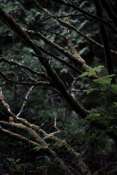 (Open rp) The sky was full of darkness and animals calling out into the wildness were to be heard everywhere along the forest. Blazingeyes was out walking slowly along the floor as the coldness hang in the air. She wasn't allowed to be out here for it was banned and she had came to see Darktalon