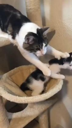 Funny Cute Cats, Cute Baby Cats, Cute Little Animals, Cute Cats And Kittens, Cute Funny Animals, I Love Cats, Kittens Cutest, Cute Dogs, Cute Animal Memes