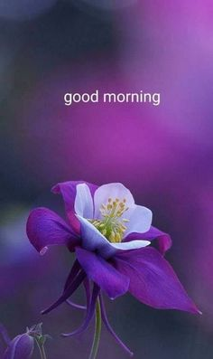 Have a beautiful morning Mr. Good Morning Friends Images, Good Morning Images Flowers, Good Morning Beautiful Quotes, Happy Morning Quotes, Good Morning Inspirational Quotes, Good Morning Picture, Good Morning Love, Good Morning Greetings, Good Morning Wishes