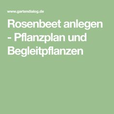 Rosenbeet anlegen - Pflanzplan und Begleitpflanzen