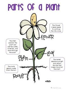 PLANT LIFE CYCLE ANCHOR CHARTS {FREEBIE}  *everything has parts/parts to whole*
