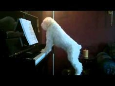 Imagine you are a singer and you accompany yourself on the piano. You have a small dog who is your constant companion and watches as you rehearse. Got the picture? Now, imagine that you must be away for a few hours and leave the dog alone at home. Here is what happened while you were away. / via YouTube