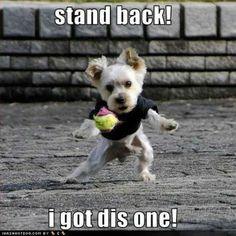 funny puppies   funny-dog-pictures-got-dis