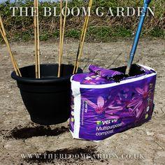 Sweet Peas www.thebloomgarden.co.uk