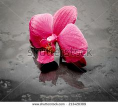 pink orchid spa over black ardesia - stock photo