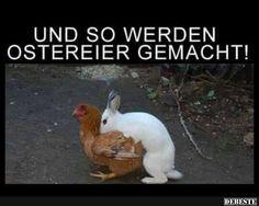 Und so werden Ostereier gemacht! | Lustige Bilder, Sprüche, Witze, echt lustig