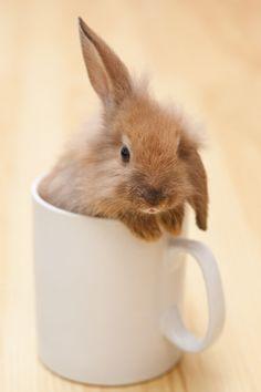 Little bunny in a mug by Saltodemata on @creativemarket